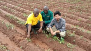 From Left : Dr. Oyatomi Olaniyi, Ben Faloye and Dr. Feldman visiting one of Bambara groundnut growing sites
